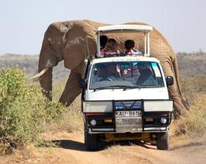 4c939-bigelephantpassingsafarivan