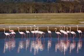 dada4-flamingoreflection