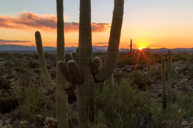 Sunset at Saguaro National Park Landscape