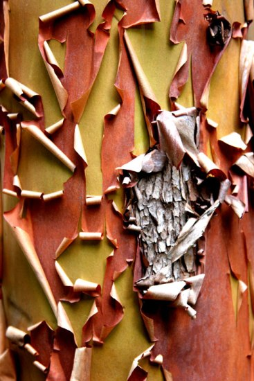Tree-bark-at-Olympic-NP-07-18-06