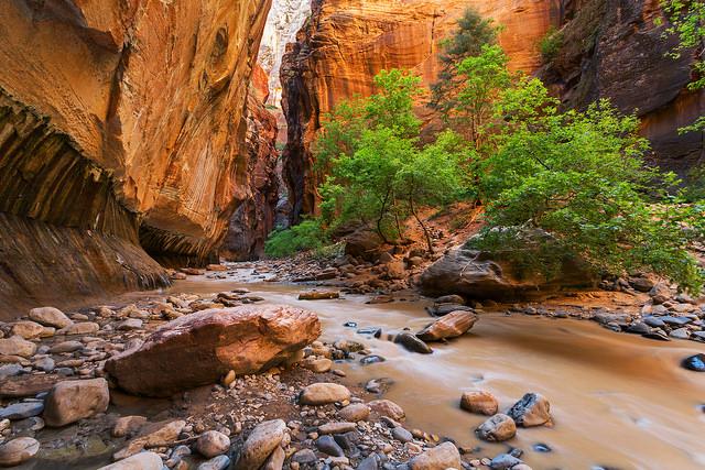 Zion Muddy Water Landscape