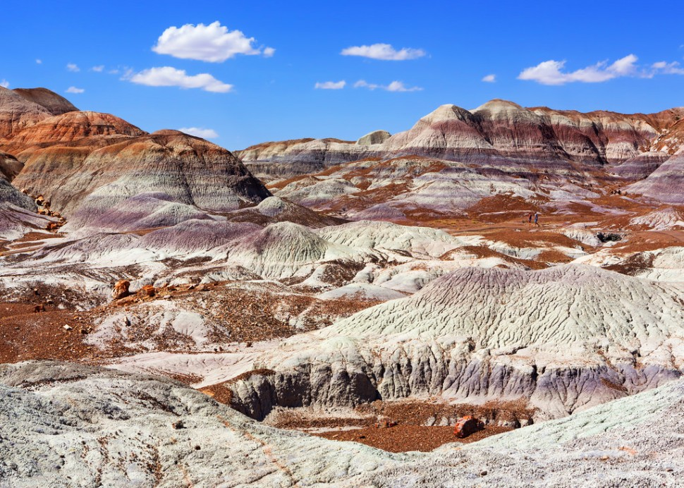 Petrified Forest Landscape