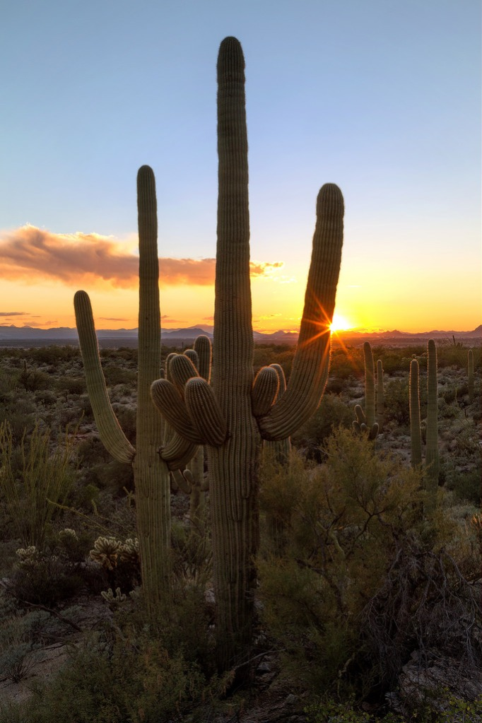 Saguaro National Park Sunset