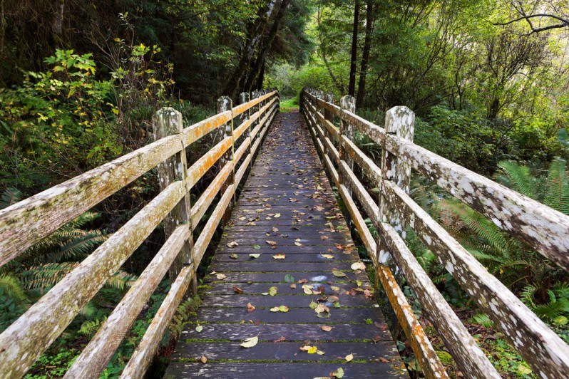Bridge at Redwoods Creek Trail