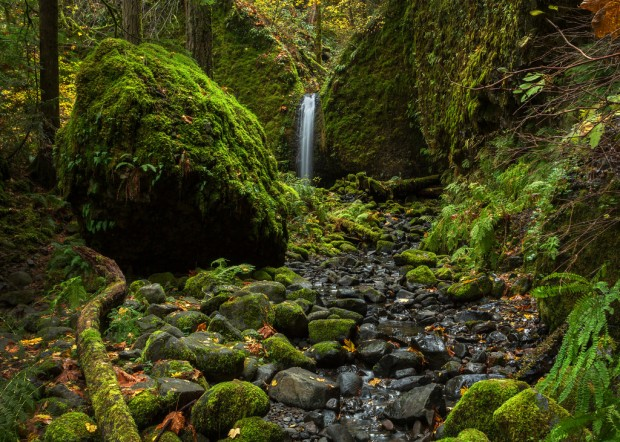 Mossy Grotto Falls Landscape
