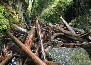 Oneonta Gorge Logjam