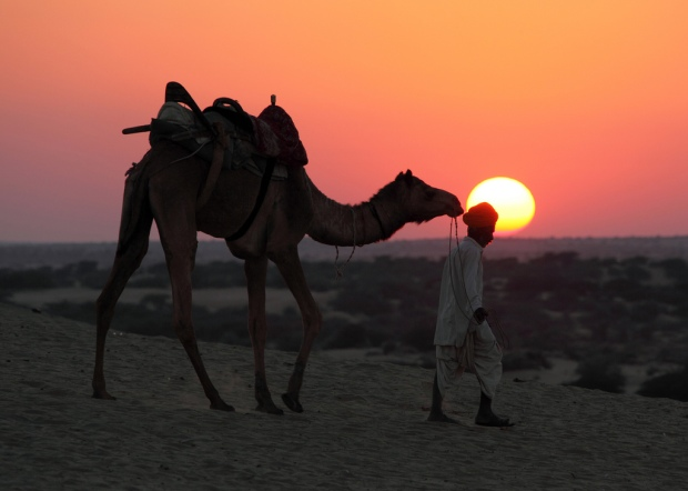 Camel Driver at Sunset