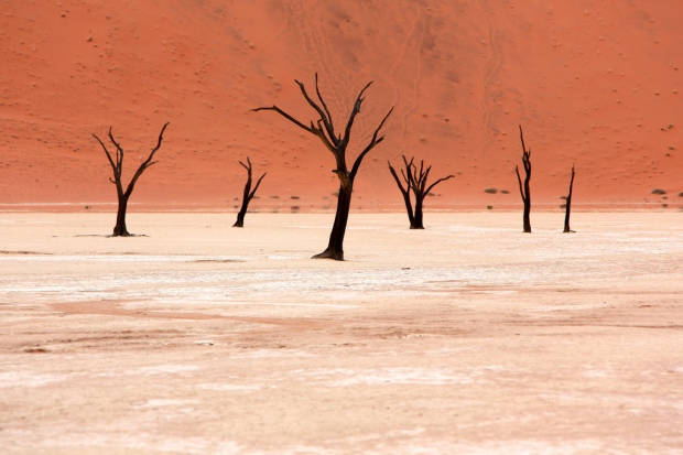 Camel-Thorn Trees in Dead Vlei