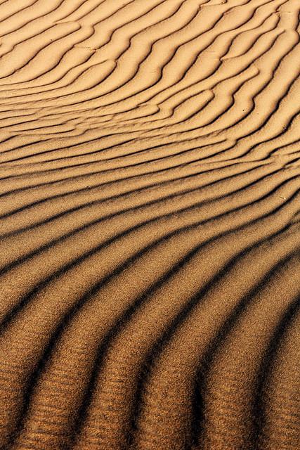 February Mesquite Dune Pattern
