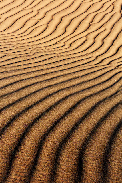 February Mesquite Dune Pattern
