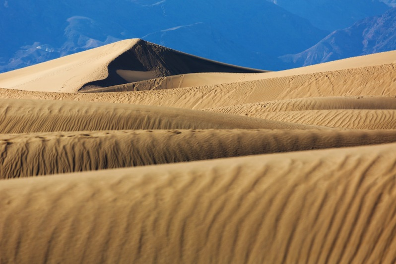Tracked Up Mesquite Dunes
