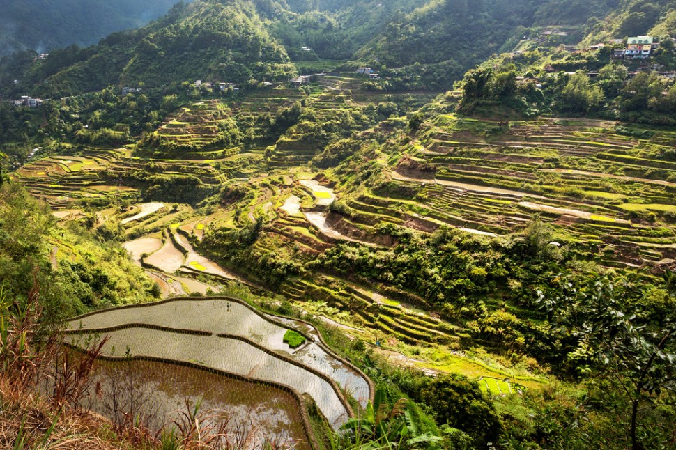 Afternoon Light on Banaue Rice Terraces