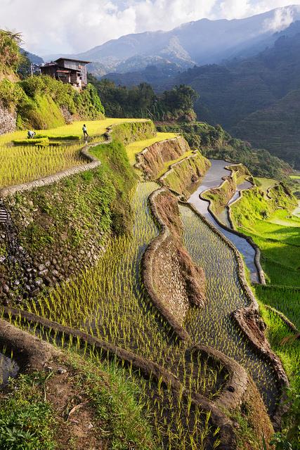 Banaue Rice Terraces Portrait