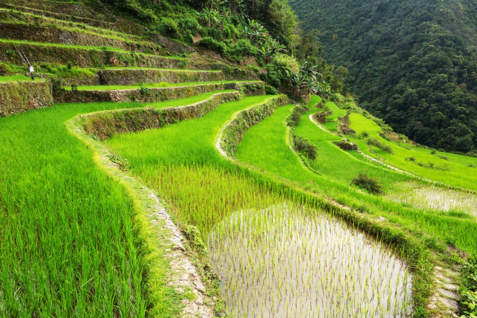 Batad Rice Terrace Landscape