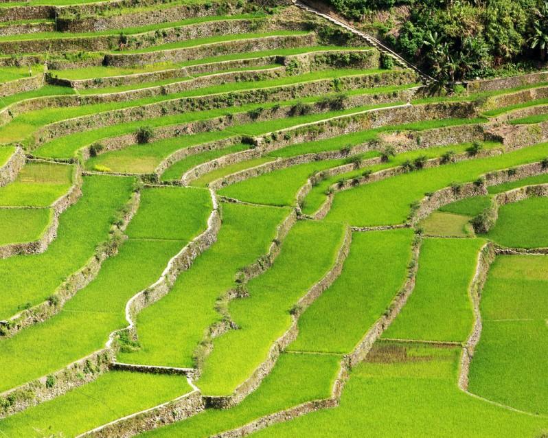 Batad Rice Terrace Pattern