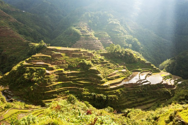 Early Light on Banaue Rice Terraces