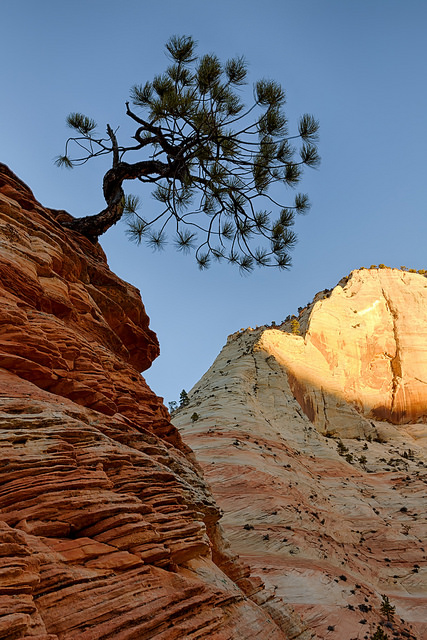 First Light Behind Zion Tree