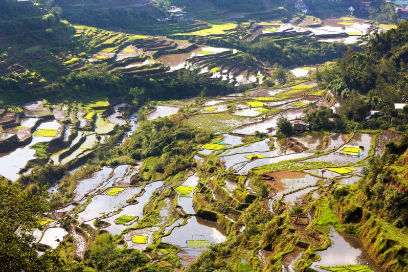 Flooded Rice Terraces in Banaue