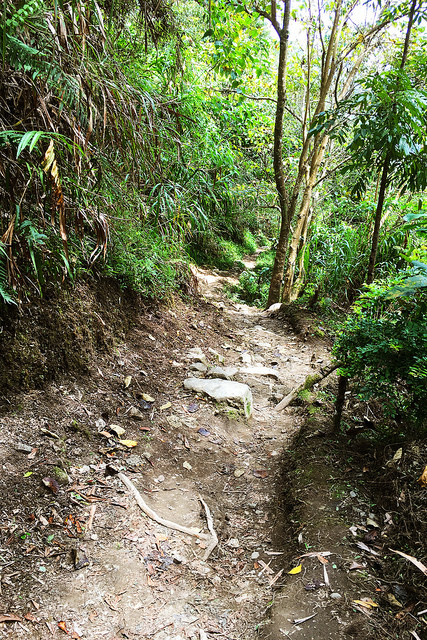 Jungle Path to Batad