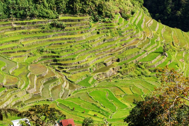 Lower Batad Rice Terraces