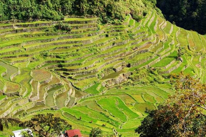 Lower Batad Rice Terraces