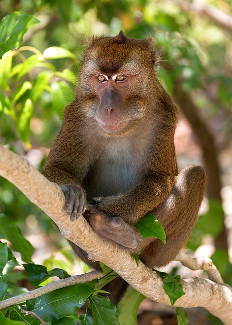 Monkey at Snake Island