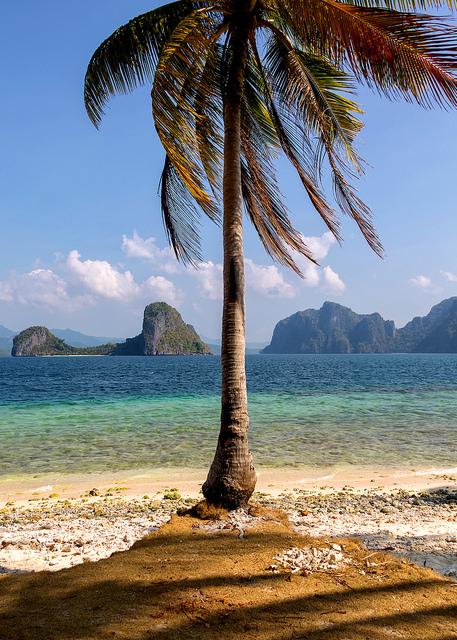 Palm Tree at Pinagbuyutan Island