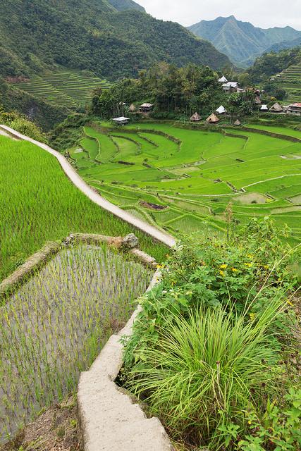 Path Through Batad Rice Terraces