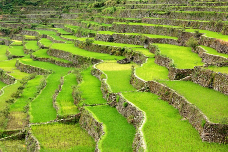 Rice Terraces Above Babloi