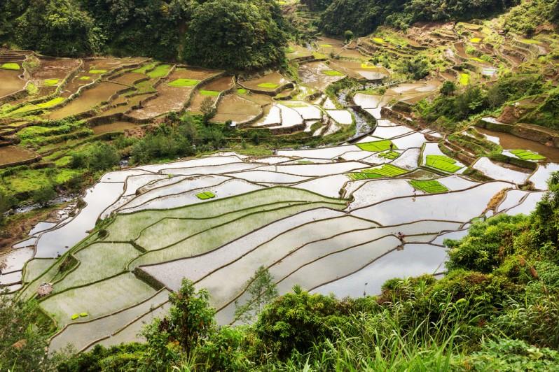 Rice Terraces Between Banaue and Batad