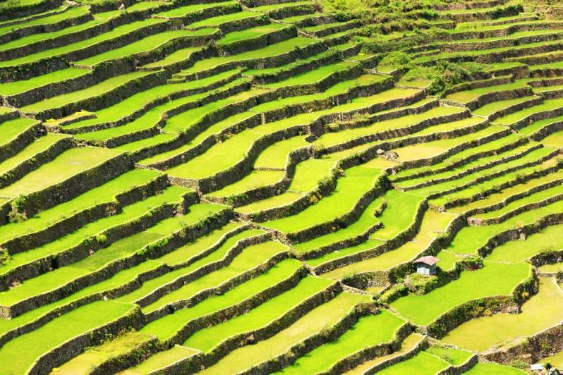 Sunlight on Batad Rice Terraces