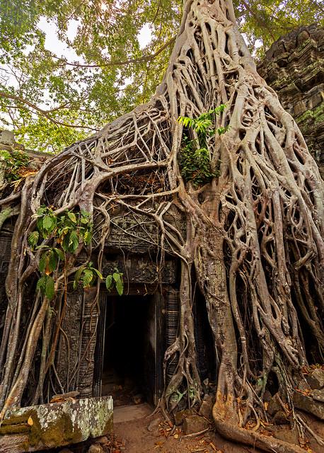 Tomb Raider Doorway at Ta Prohm