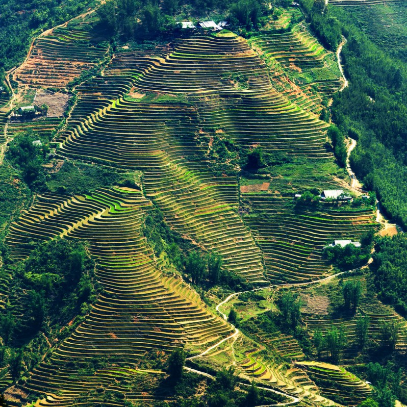 Rice Terrace Hillside Near Hau Thao