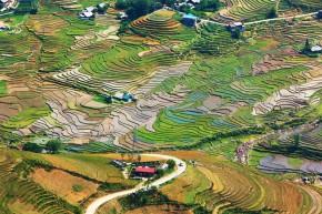 Rice Terrace Landscape Between Hau Thoa and Sapa