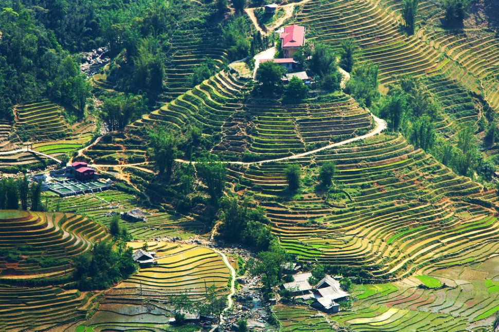 Rice Terrace Landscape Near Hau Thao
