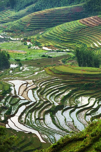 Rice Terraces around Cat Cat
