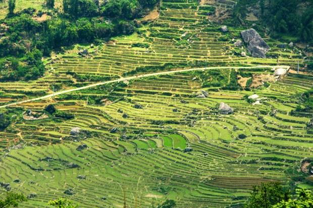 Sunny Rice Terrace Landscape Near Sapa