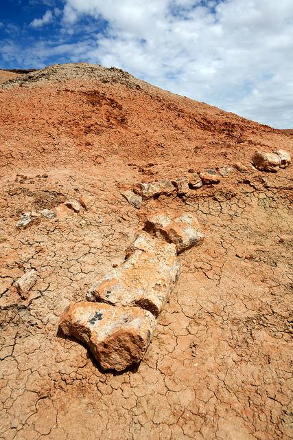 Dinosaur Bones Near Shambhala