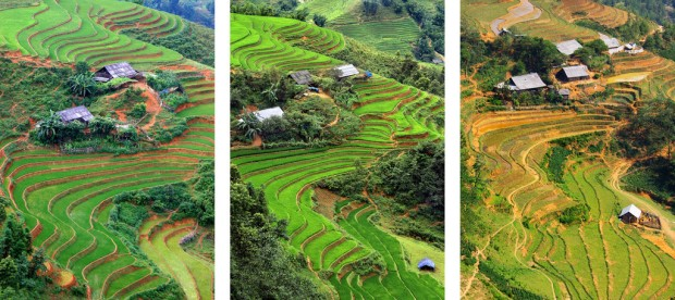 Farms and Terraced Rice in 2006, 2010, and 2016