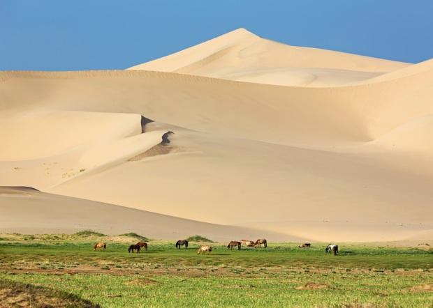 Horses at Khongoryn Els