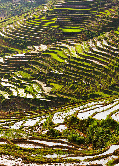 Rice Terrace Afternoon Light Portrait