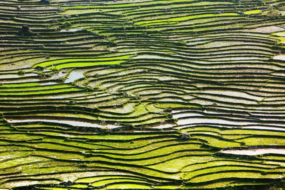 Rocky Rice Terrace Landscape