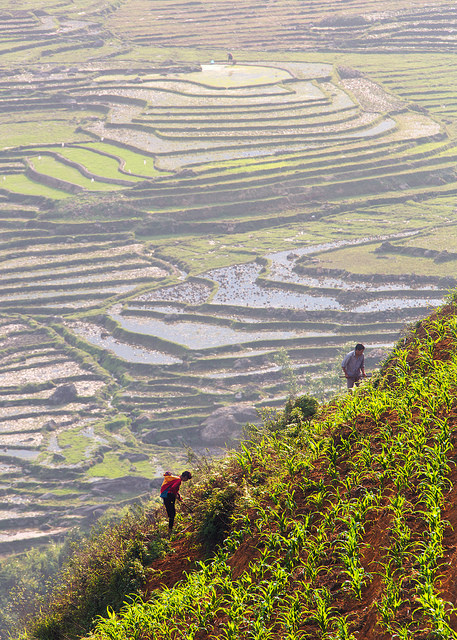 Steep Hillside Cultivation