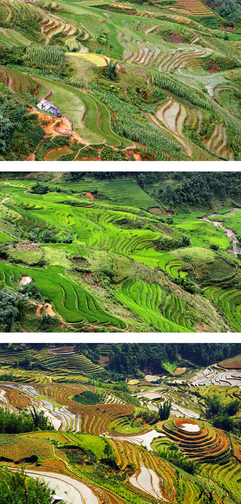 Terraced Rice Fields Landscape in 2006, 2010, and 2016