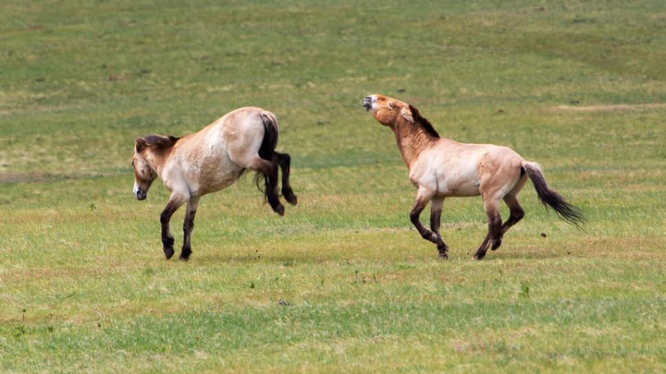 Wild Horse Shenanigans at Khustain