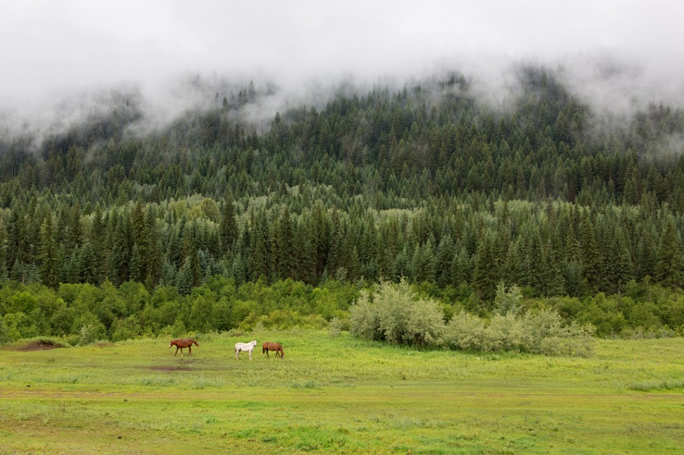 Horses and Fog in BC