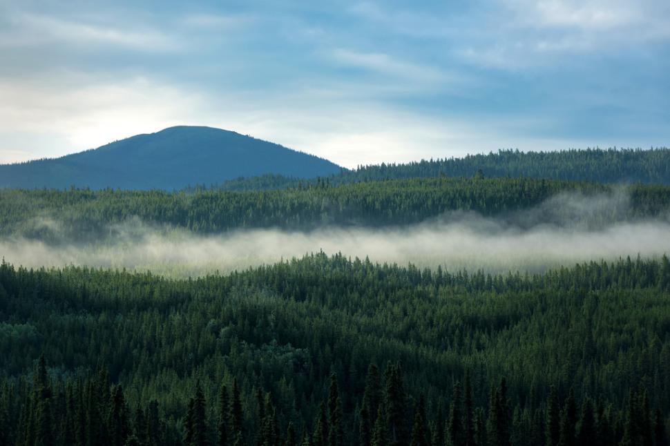 Morning Light Along the Alaska Highway