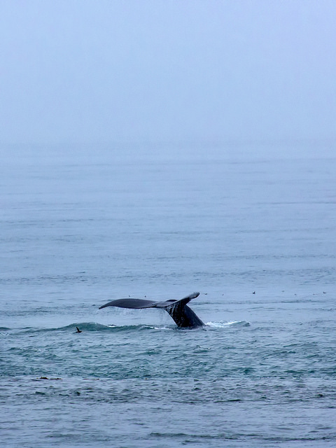 Rainy Day Whale Tail