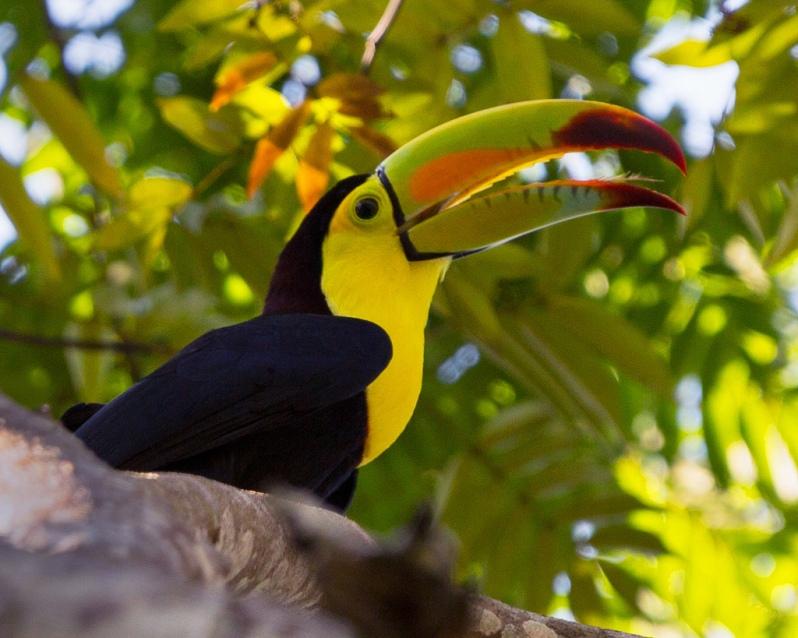 toucan-at-tikal