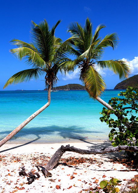 trunk-bay-palm-trees